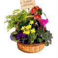 Buy online & send a gift basket of flowering plants.
