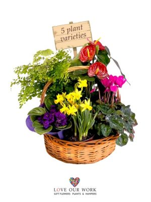Basket of Flowering Plants