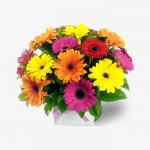 Box of Gerbera Happiness Arrangement