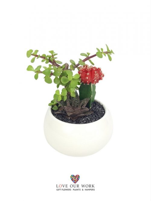 This Cacti Garden is a perfect gift for those who like things a little left-of-centre